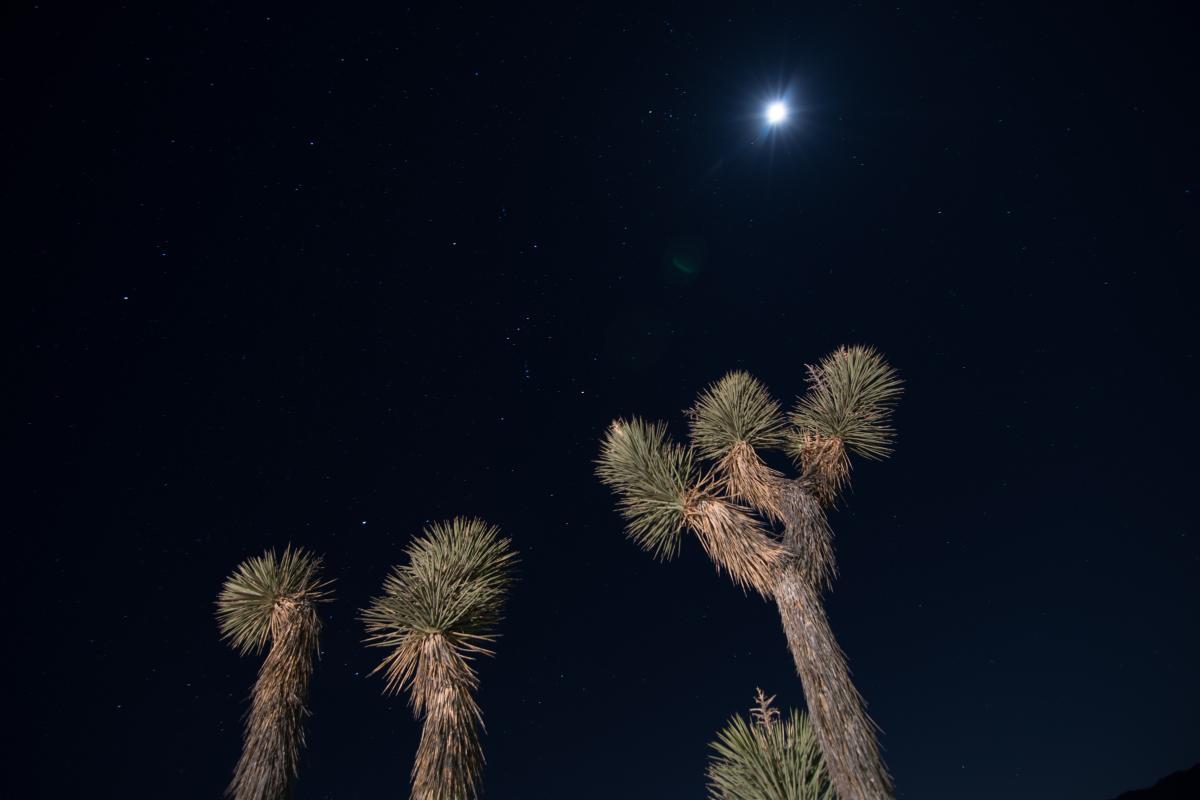 Orion, Tree, Moon