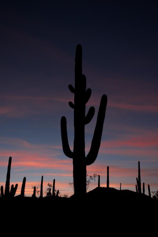 Sunrise with Saguaros