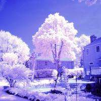 Backyard IR