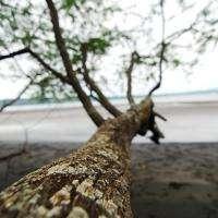 Tree to Ocean
