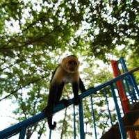 Monkey Close