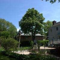 Backyard Normal