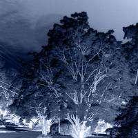 Magic Tree