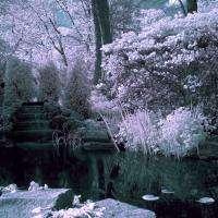 IR Pond