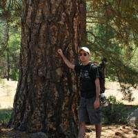 Big Tree?