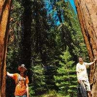 Next to Trees