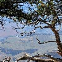 Squiggle Tree