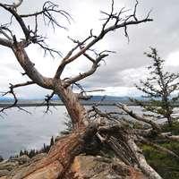 Dead Tree 7