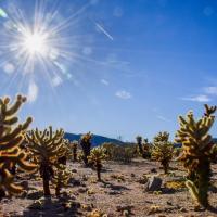Sunny Cacti