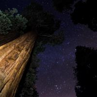 Sequoia Sky