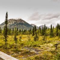 Overcast Path